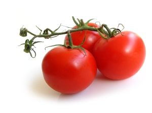 Three Tomatoes on a vine
