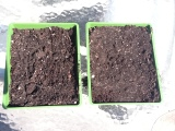 Seed trays and soil